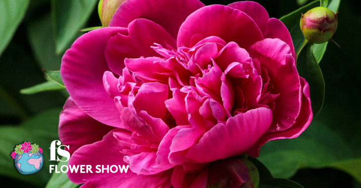 Primavera Flower Show 2017