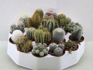 Le piante succulente o piante grasse