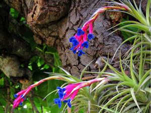 Le piante epifite o piante aeree