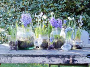 Le piante bulbose, rizomatose e tuberose da fiore