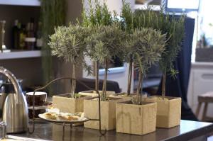 Le piante aromatiche e officinali